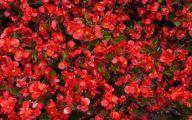 Red Flowers 100 Hd Wallpaper