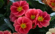 Red Flowers 39 Cool Wallpaper