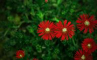 Red Flowers 50 Cool Hd Wallpaper