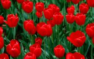 Red Flowers 55 Widescreen Wallpaper