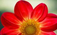 Red Flowers 76 Desktop Background