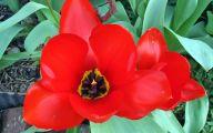 Red Flowers Names 10 Desktop Wallpaper