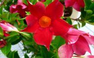 Red Flowers Names 6 Desktop Background