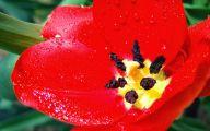 Red Flowers Names 8 Desktop Background