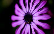 Types Of Black Flowers 14 Desktop Wallpaper
