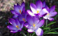 Types Of Black Flowers 31 Widescreen Wallpaper