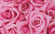 Types Of Pink Flowers 20 Cool Wallpaper