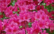 Types Of Pink Flowers 3 Wide Wallpaper