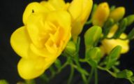 Types Of Yellow Flowers 15 High Resolution Wallpaper