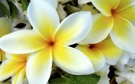 Types Of Yellow Flowers 24 Widescreen Wallpaper