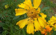 Types Of Yellow Flowers 3 Free Wallpaper