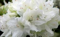 White Flower  13 Cool Wallpaper