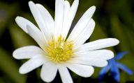 White Flower  71 High Resolution Wallpaper