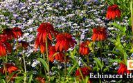 White Flower Farm Perennials 10 Hd Wallpaper