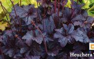 White Flower Farm Perennials 13 Desktop Background