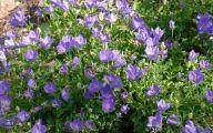 White Flower Farm Perennials 28 Free Hd Wallpaper