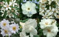 White Flowers Meaning 10 Wide Wallpaper