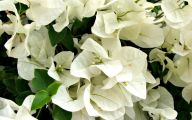 White Flowers Meaning 16 Cool Wallpaper