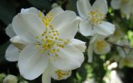 White Flowers Meaning 19 Widescreen Wallpaper
