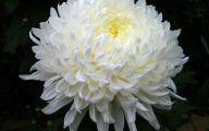 White Flowers Meaning 28 Desktop Wallpaper