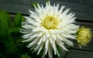 White Flowers Meaning 9 Cool Hd Wallpaper