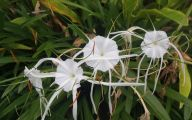 White Flowers Names 16 Cool Hd Wallpaper