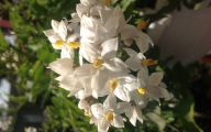White Flowers Names 17 Widescreen Wallpaper