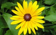 Yellow Flowers 105 Free Wallpaper
