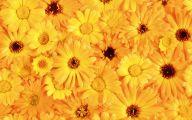 Yellow Flowers 120 High Resolution Wallpaper