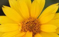 Yellow Flowers 123 High Resolution Wallpaper