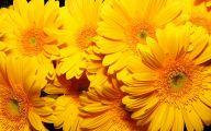 Yellow Flowers 143 Free Hd Wallpaper