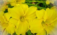 Yellow Flowers 148 Free Hd Wallpaper