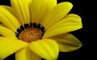 Yellow Flowers 159 Widescreen Wallpaper
