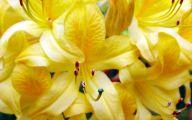 Yellow Flowers 164 Desktop Background