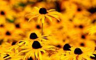 Yellow Flowers 185 Desktop Wallpaper