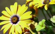Yellow Flowers Meaning 12 Widescreen Wallpaper