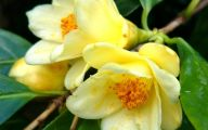 Yellow Flowers Meaning 19 Cool Wallpaper