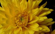 Yellow Flowers Meaning 27 Cool Hd Wallpaper