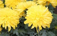 Yellow Flowers Meaning 9 Hd Wallpaper