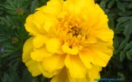 Yellow Flowers Names 12 Widescreen Wallpaper