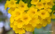 Yellow Flowers Names 3 Cool Hd Wallpaper