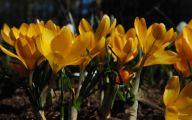 Yellow Flowers Of Spring Crossword 1 Widescreen Wallpaper