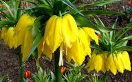 Yellow Flowers Of Spring Crossword 14 Cool Hd Wallpaper