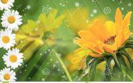 Yellow Flowers Of Spring Crossword 21 Hd Wallpaper