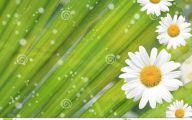 Yellow Flowers Of Spring Crossword 26 Free Wallpaper