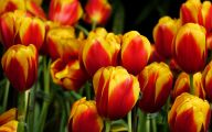 Yellow Flowers Of Spring Crossword 28 Free Hd Wallpaper