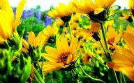 Yellow Flowers Of Spring Crossword 30 Cool Hd Wallpaper