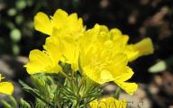 Yellow Flowers Of Spring Crossword 31 Background Wallpaper