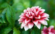 Black Flower Blossom Band 10 Desktop Background