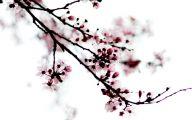 Black Flower Blossom Band 15 Widescreen Wallpaper